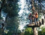 Recorrido arbóreo