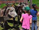 Paseos en burro Extremadura